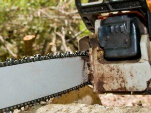 Operator la recoltarea si toaletarea arborilor forestieri